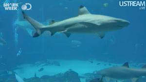 discovery channel shark week semana tiburon transmision vivo live streaming